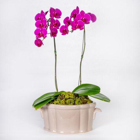 Arranjo-em-vaso-de-ceramica-com-orquideas-phalaenopsis-cascata-pink--2-
