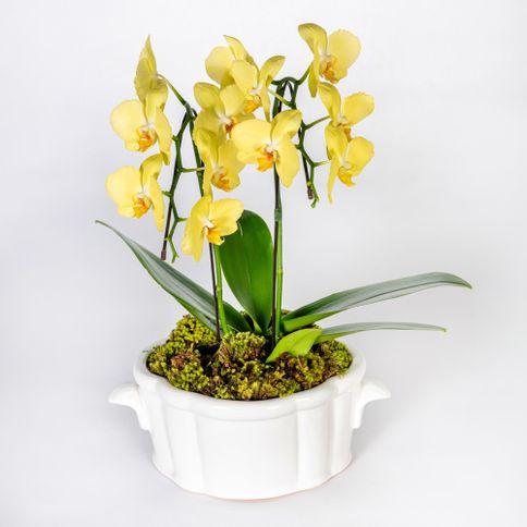 Arranjo-em-vaso-de-ceramica-com-orquideas-phalaenopsis-cascata--1-