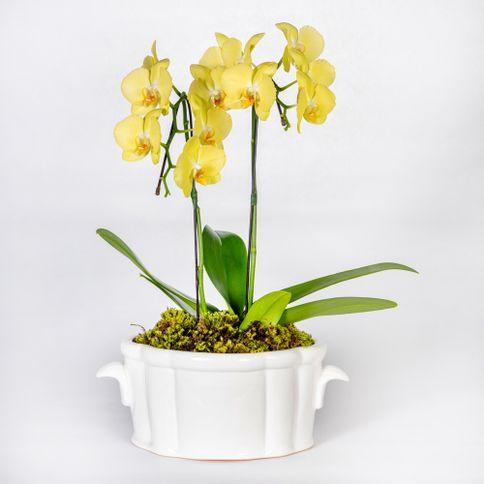 Arranjo-em-vaso-de-ceramica-com-orquideas-phalaenopsis-cascata--2-