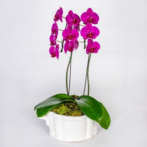 Arranjo-em-vaso-de-ceramica-com-orquideas-phalaenopsis-cascata-pink--1-