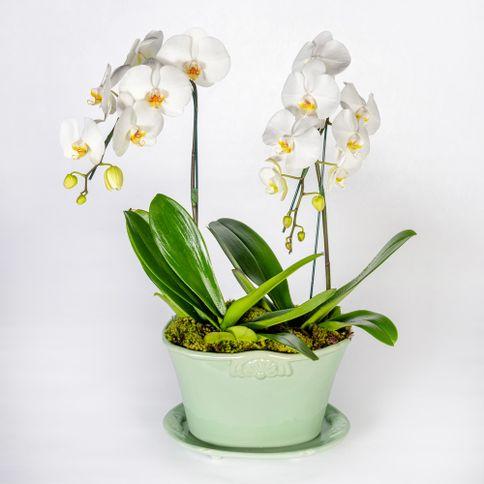 Arranjo-em-vaso-com-orquideas-phalaenopsis-cascata-brancas--1-