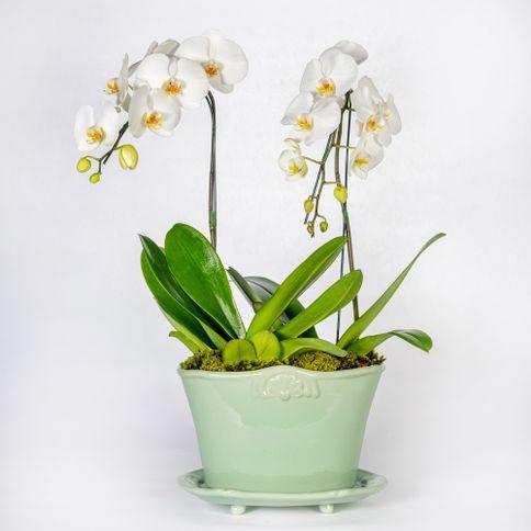 Arranjo-em-vaso-com-orquideas-phalaenopsis-cascata-brancas--2-