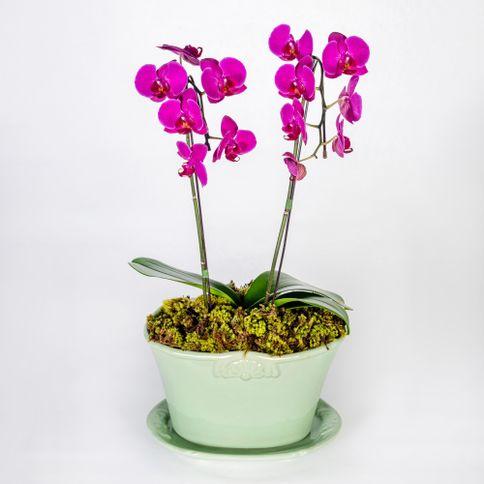 Arranjo-em-vaso-com-orquideas-phalaenopsis-cascata-pink--1-
