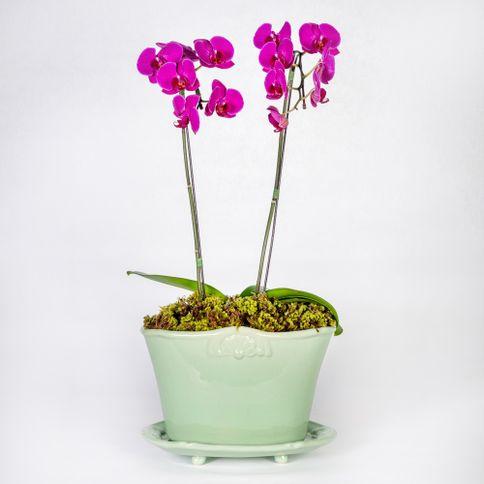 Arranjo-em-vaso-com-orquideas-phalaenopsis-cascata-pink--2-