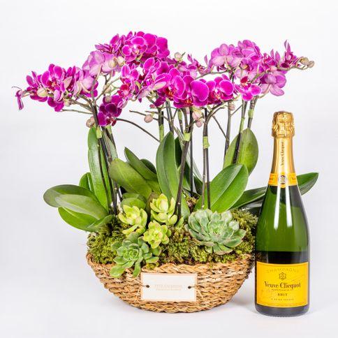 Mini-Orquidea---Marylabone-Veuve-Clicquot
