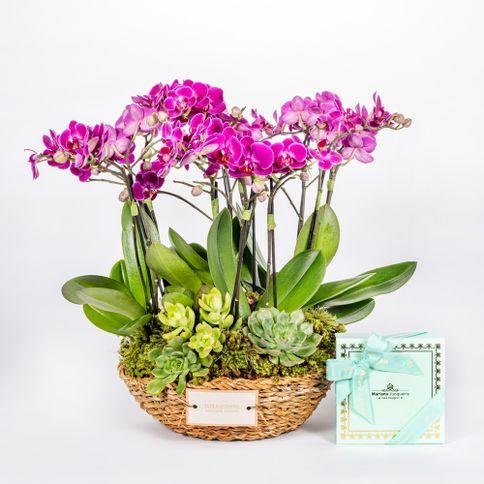 Mini-Orquidea---Marylabone-Candy