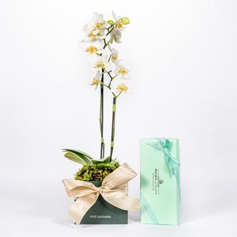 Mini-Orquidea-Lady-White---Candy